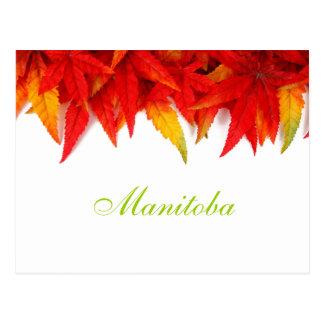 Manitoba-Herbst verlässt Postkarte