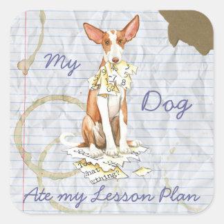 Mein Ibizan Jagdhund aß meinen Unterrichtsplan Quadratischer Aufkleber