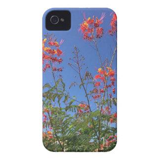 Mexikanischer Paradiesvogel iPhone 4 Hülle