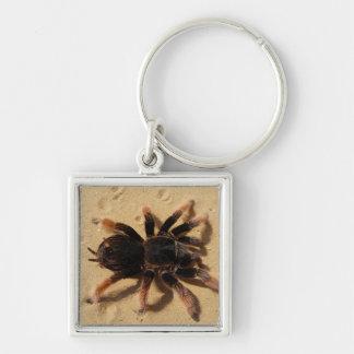 Mexikanischer rosa Tarantula Schlüsselanhänger