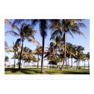 Miami-Palmen Postkarte