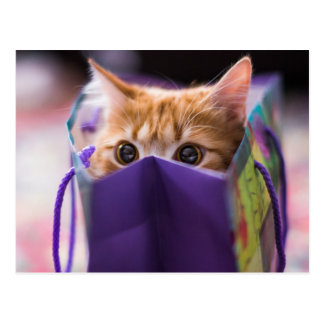 Miezekatze-Geschenk-Tasche Postkarten