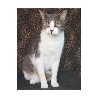 Mikey, niedliche Katze/Kitty Gespannter Galerie Druck