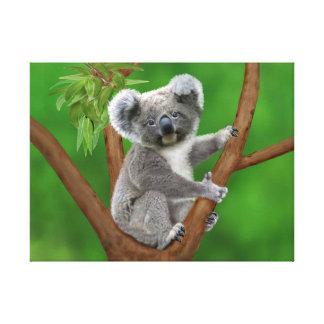 Mit blauen Augen Baby-Koala-Bär Leinwanddruck
