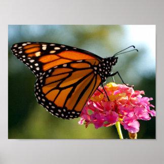 Monarch auf Blumenplakat Poster