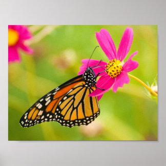 Monarch auf heller rosa Blume Poster