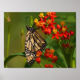Monarch-Reflexionen Poster