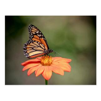 Monarch-Schmetterling auf einer orange Blume Postkarte