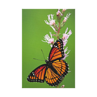 Monarch-Schmetterling und Blume auf grünem Leinwanddruck