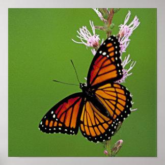 Monarch-Schmetterling und Blume auf grünem Poster