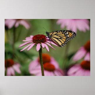 Monarch-Schmetterling und schwarze mit Augen Susan Poster