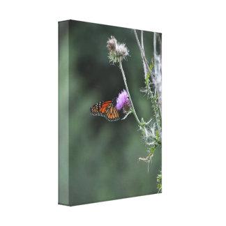 Monarch-Schmetterlings-eingewickelte Leinwand