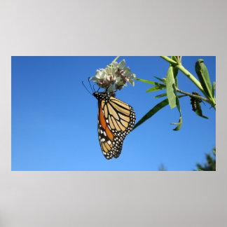 Monarchfalter gegen blauen Himmel - Poster