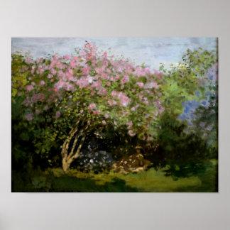 Monet - Fliedern im Sun Poster