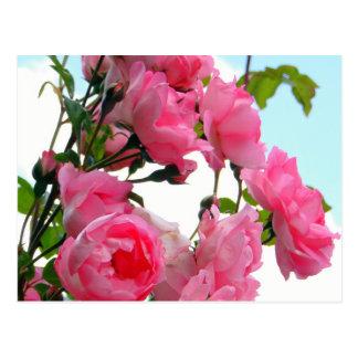 """""""Monets Rosen-Garten-"""" Postkarte"""