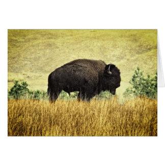 Montana-Büffel Karte