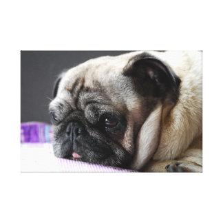 Mops Pug ~ Foto Jean-Louis Glineur Leinwanddrucke