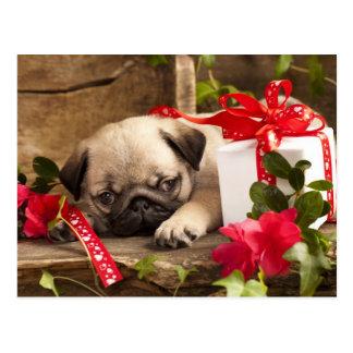 Mops-Welpe und Geschenkboxen Postkarten