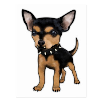 Mörder-Chihuahua Postkarte