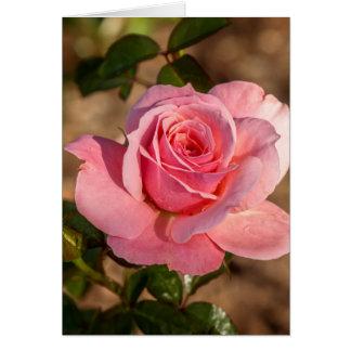 Morgen der rosa Rose Karte