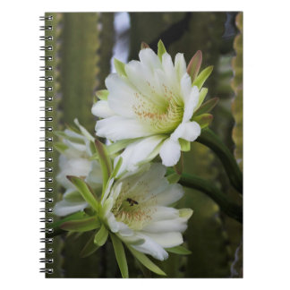 Morgen-Kaktus-Blüten-Notizbuch Notizblock