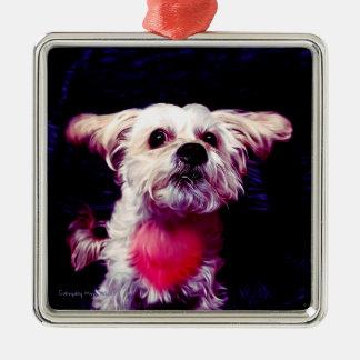 Morkie Hundewelpen-Liebe-Herzvalentine-Verzierung Silbernes Ornament