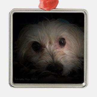 Morkie Hundewelpen-niedliche Rettungs-Verzierung Silbernes Ornament