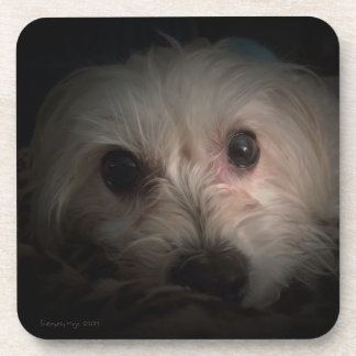 Morkie Hundewelpen-niedlicher Rettungs-Untersetzer Untersetzer