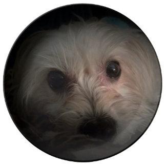 Morkie Hundewelpen-Rettungs-niedliche Porzellanteller
