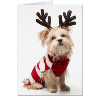 Morkie Zuchthund mit den Weihnachtsgeweihen Karte