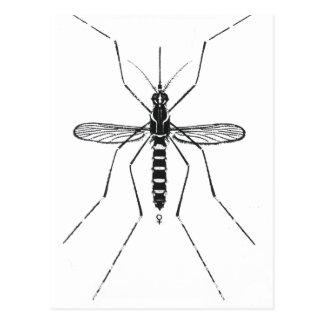 Moskito-wissenschaftliche Nomenklatur-Illustration Postkarte