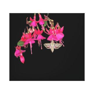 Motten-Schmetterling Sphynx Fuschia Blumen mit Leinwanddruck