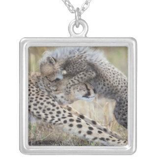 Mutter des Gepards (Acinonyx jubatus), die mit Versilberte Kette