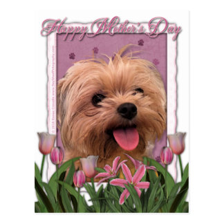 Mutter-Tag - rosa Tulpen - Morkie - Lacey Postkarte