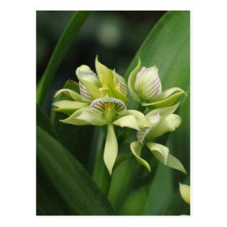 Mysteriöse und atemberaubende Orchidee Postkarte