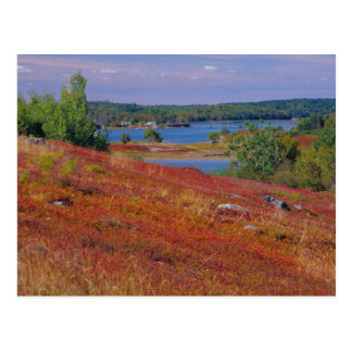 Na, USA, Maine. Blaubeere Barrens. Postkarte