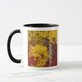 Na, USA, Washington, Wenatchee nationaler Wald Tasse