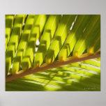 Nah oben vom tropischen Palmenwedel Posterdrucke