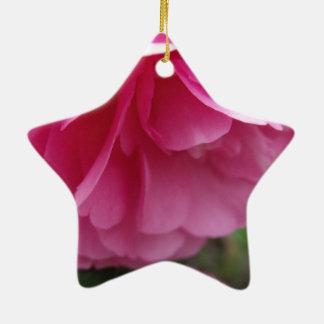 Nahaufnahme-rosa Blumen-Rosa Camillia Keramik Stern-Ornament