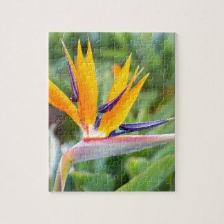 Nahe hohe Kran-Blume oder Strelitzia reginaei Puzzle