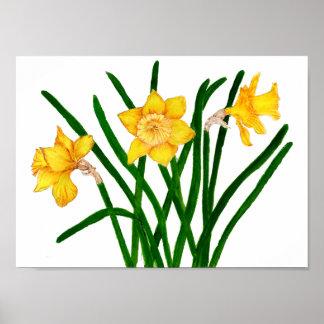 Narzissen-Blumen-Wasserfarbe-Malerei-Druck-Grafik Poster