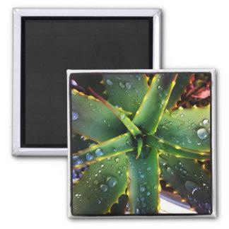 Nasse Aloe Quadratischer Magnet