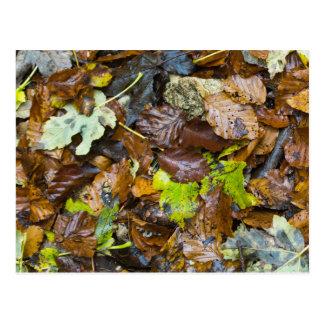 Nasses Herbst-Blätter Postkarte