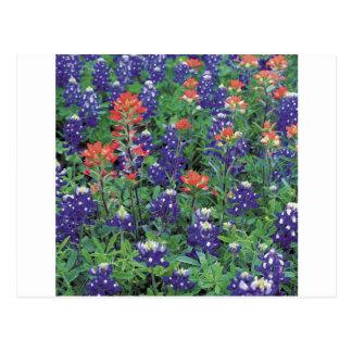 Natur-Frühlings-Blumen-lila Frühling Postkarten