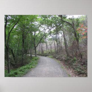 Natur-Waldweg mit Kurven-Plakat Poster
