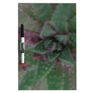 Nebelhafter Succulent, grünes Lila, Natur, Memo Boards