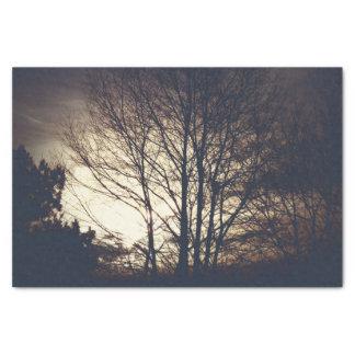 Nebeliges Fall-Abends-Seidenpapier Seidenpapier