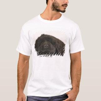 Neufundland-Welpenschlafen (Canis familiaris). T-Shirt