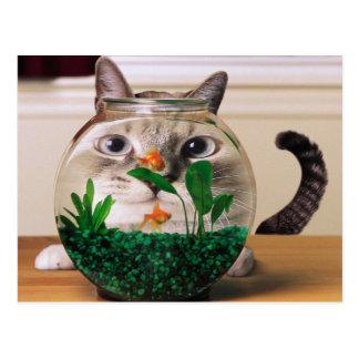 Neugierige Katze hinter einem Fishbowl Postkarten