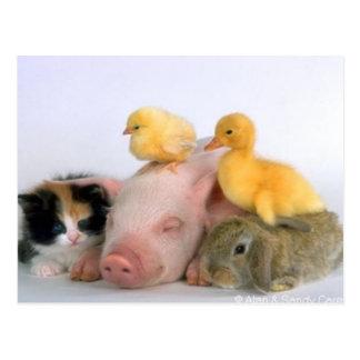 Nickerchen-Zeit für die Tiere Postkarte